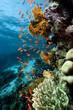 Fish. coral and ocean.