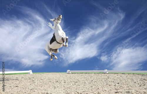 Beautiful White Horse Jumping Quot a Beautiful White Horse