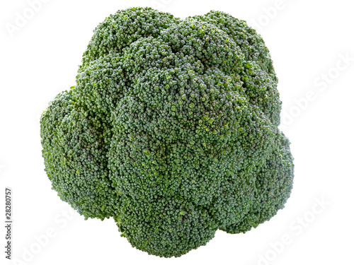 single broccoli isolated on white