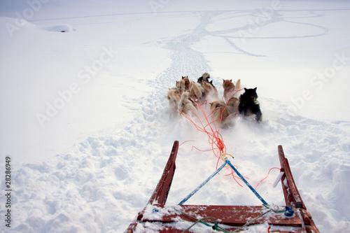 Fotobehang Antarctica 2 Greenlandic sled dogs