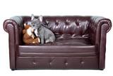 French Bully mit Teddy auf dem Sofa poster
