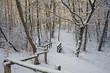 Wanderweg im verschneiten Wald