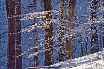 Blick in winterlichen Wald mit Schnee