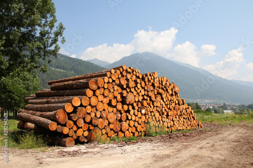 Wooden logs in Italy, Trentino region