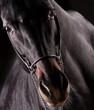 Fototapeten,pferd,isoliert,portrait,schwarz