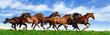 Fototapeten,reiter,herde,pferd,aktiv