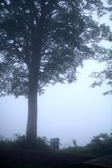霧の中の木と子供