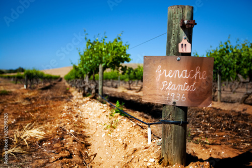 Vintage Barossa Vineyard