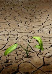 życie na pustyni - roślina