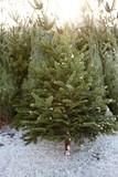 Fototapety Weihnachtsbaumverkauf