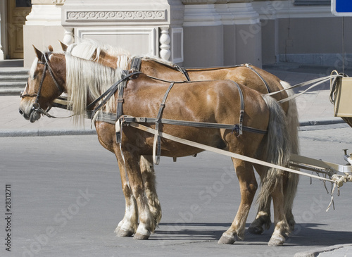 Two horses in a street