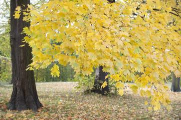coloured leaves on a tree