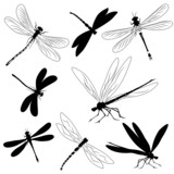 Fototapety Set of silhouettes of dragonflies, tattoo