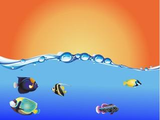 puaeta peces