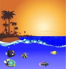 puesta peces playa