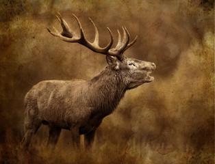 cerf chasse,chasseur,tadition,brame bois cors cervidé mammifèr