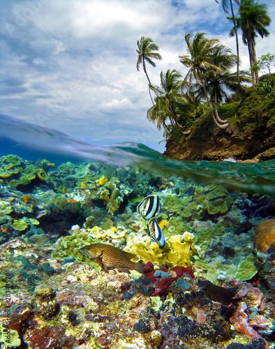 snorkeling paradise in Panama