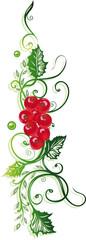 Ranke, Blätter, Laub, rote Johannisbeeren, vector