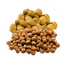 fresh walnuts and hazelnuts on a white background