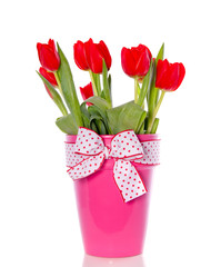 cheerful red tulip bouquet in a pink vase with ribbon isolated o