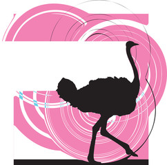 Ostrich illustration