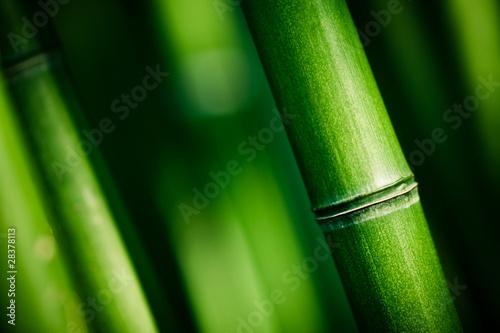 Bambou zen © Beboy