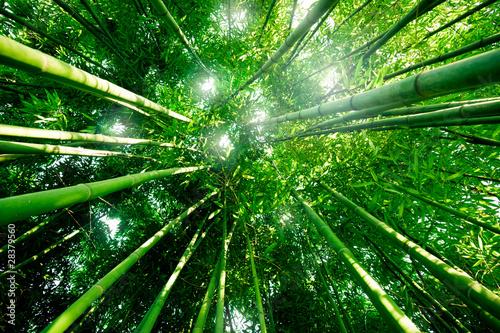Panel Szklany Bambou zen forêt