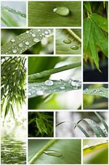 composition nature zen