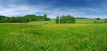"""Постер, картина, фотообои """"Fresh flowered meadow"""""""