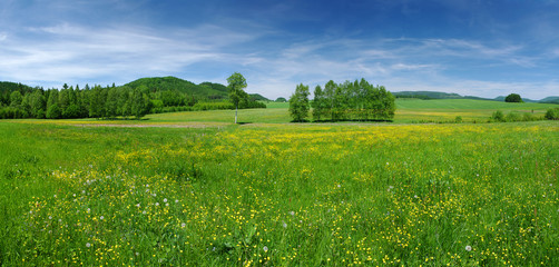Fresh flowered meadow © CCat82