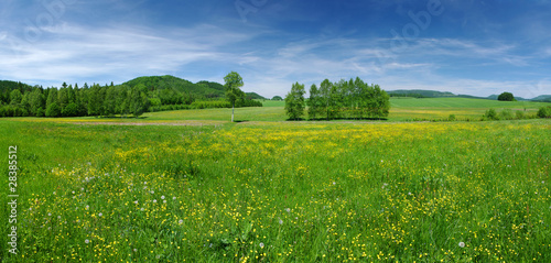 Fresh flowered meadow