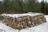 Woodpile next to Christmas tree forest poster