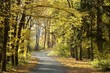 Road through the autumn forest on a sunny morning