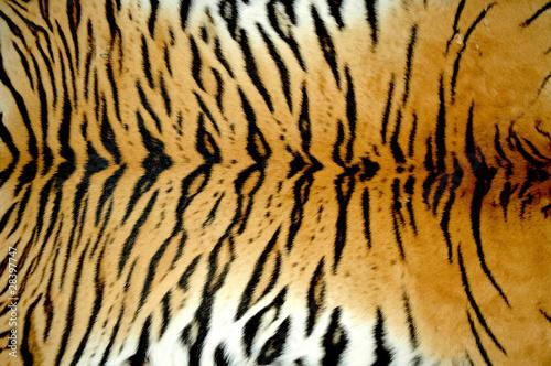 real tiger skin