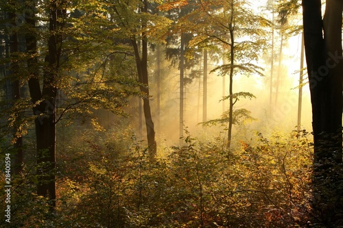 Leinwandbild Motiv Picturesque autumnal forest backlit by the rising sun