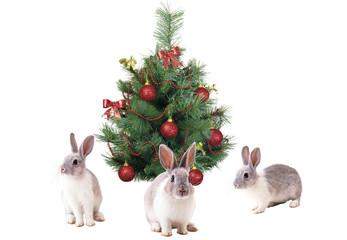 Rabbits and tree