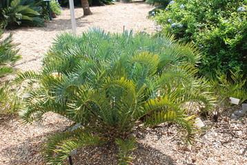 USA, Miami, jardin botanique, palmier, arbre, fleur