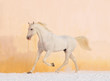 white horse on winter background