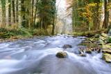 Autumn forest stream