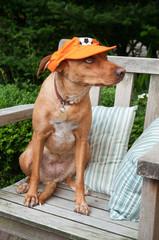 Dutch dog as soccer fan
