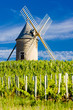 vineyards with windmill near Chénas, Beaujolais, Burgundy, Franc