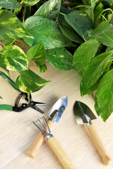 Gardening tools and houseplants – still life.