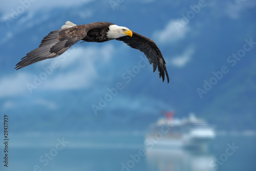 Eagle american bald eagle superimposed over alaska inside passage scen