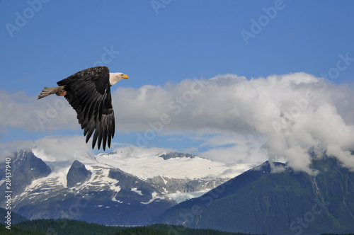 american bald eagle superimposed over alaska coastal mountain sc