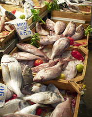 variety of fish laid at the local market