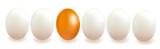 Different object. Concept with eggs. Vector.