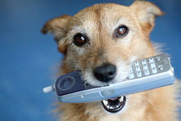 Dog holding telephone in mouth