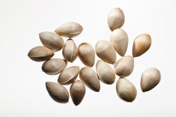 seed(ginkgo_nut)_044
