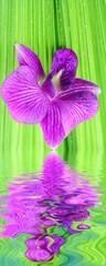 orchidée mauve sur palme verte