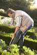 Young man working in garden
